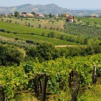 L'Abruzzo dei vini – Non solo Montepulciano