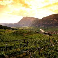 Il Trentino e l'Alto Adige – Vino e cultura alpina