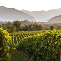 Franciacorta: terra di storia, di vini e di spumanti